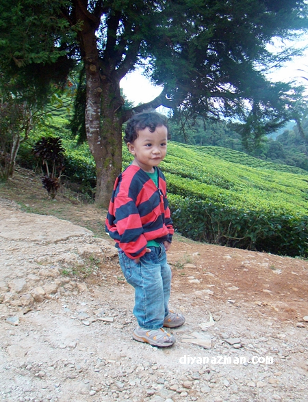 miki in tea plantation