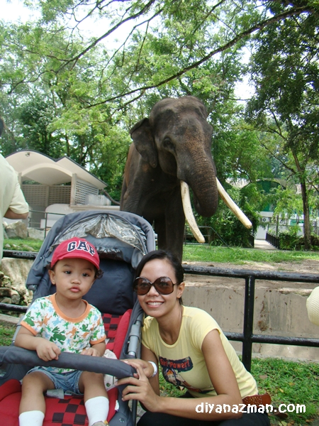 miki and elephant