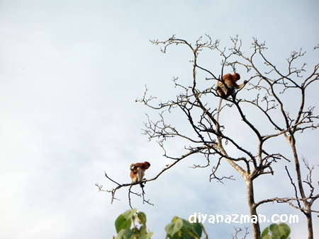 monkeys on the tree