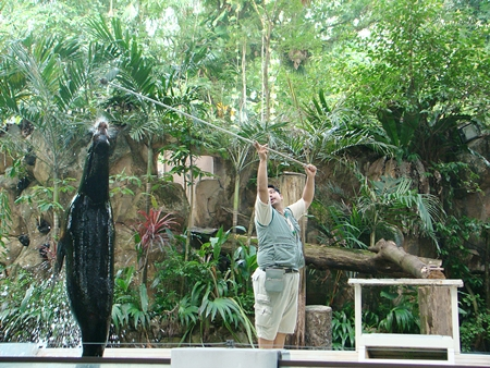 seal animal show in zoo negara